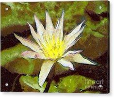 Water Lily Acrylic Print by Odon Czintos