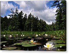 Water Lly Field Acrylic Print