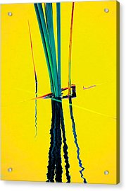 Water Reed Reflections  Acrylic Print by Beth Akerman