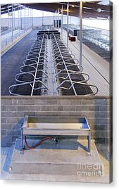 Water Trough And Cattle Cubicles Acrylic Print by Jaak Nilson