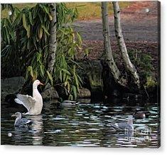 Waterbirds Acrylic Print by Billie-Jo Miller