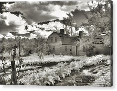 Watercolor In Black And White Acrylic Print by Joann Vitali