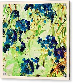 Watercolor Violets #android Acrylic Print