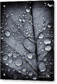 Waterdrops II Acrylic Print
