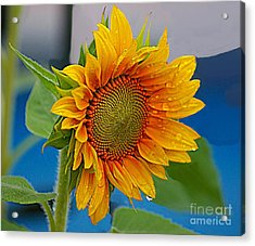 Watered Sun Acrylic Print