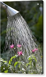 Watering Can Acrylic Print by Picture Partners and Photo Researchers
