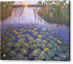 Waterlillies South Africa Acrylic Print