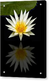 Waterlily And Reflection Acrylic Print
