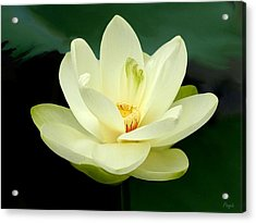 Acrylic Print featuring the digital art Waterlily by John Pangia