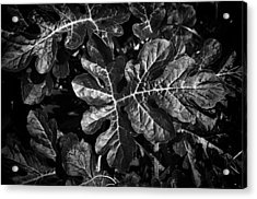 Watermelon Leaves Acrylic Print by Tom Bell