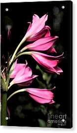 Wave Of Pink Acrylic Print by Diana  Tyson