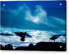 Wavedance Acrylic Print