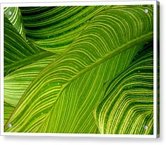Waves Of Green And Yellow Acrylic Print