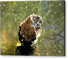Acrylic Print featuring the photograph We All Float Down Here by Bruce Carpenter
