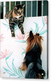 We Can Talk This Over... Acrylic Print by Tanya Tanski