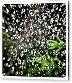 Web Dew Acrylic Print
