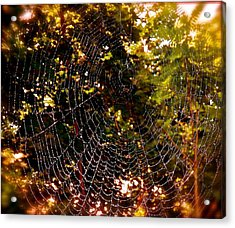 Web Illusion Acrylic Print by Gloria Warren