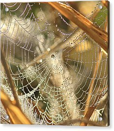 Acrylic Print featuring the photograph Web Of Jewels by Penny Meyers