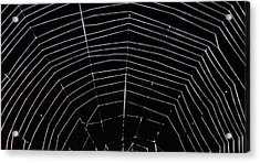 Acrylic Print featuring the photograph Web Wonder 2 by Elizabeth Sullivan