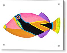 Wedge Tail Triggerfish  Acrylic Print by Opas Chotiphantawanon