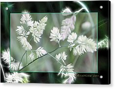 Acrylic Print featuring the photograph Weeds by EricaMaxine  Price
