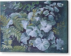 Weeping Ladies Mantle Acrylic Print by Patsy Sharpe