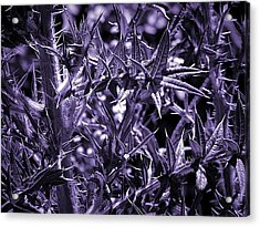 Welcome To The Purple Jungle Acrylic Print by Beth Akerman