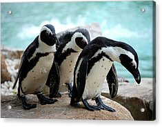 Acrylic Print featuring the photograph We're Sorry by Kathy Gibbons