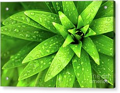Wet Foliage Acrylic Print by Carlos Caetano