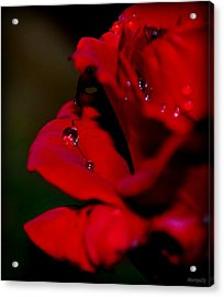 Acrylic Print featuring the photograph Wet by Marija Djedovic