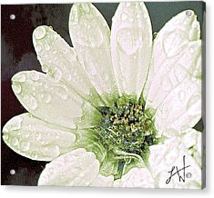 Acrylic Print featuring the digital art Wet Petals by Artist and Photographer Laura Wrede