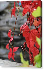 Wet Reds Acrylic Print by Louise Mingua