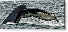 Whale Tail Acrylic Print by Jon Berghoff