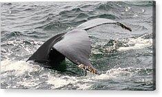 Whale Tale Acrylic Print by Tammy Bullard