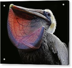 What A Catch Acrylic Print by Paulette Thomas
