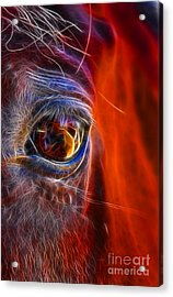 What Are You Looking At Now? Acrylic Print by Mariola Bitner