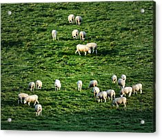 What The Flock Acrylic Print by Bill Cannon