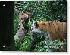 What You Doing Acrylic Print by Carol Wright