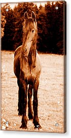 Whats Goin On Acrylic Print