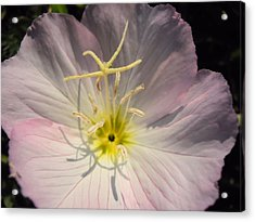 What's Up Buttercup Acrylic Print by Lynnette Johns