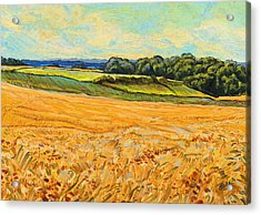 Wheat Field In Limburg Acrylic Print by Nop Briex