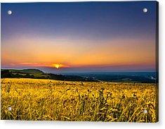 Wheat Field Acrylic Print by Rob Webb