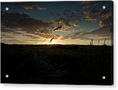 Wheat Fields  Acrylic Print