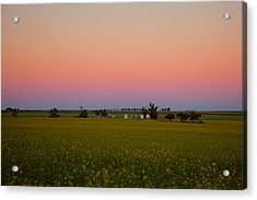Wheatbelt Country Acrylic Print