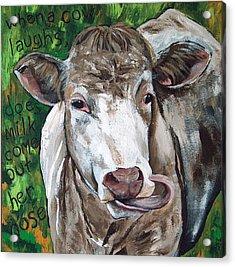 When A Cow Laughs Acrylic Print by Racquel Morgan