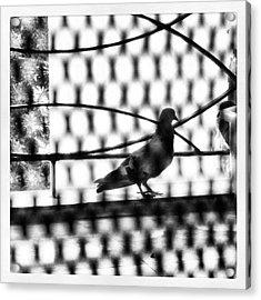 When I Look At Birds, I Feel I Have Acrylic Print