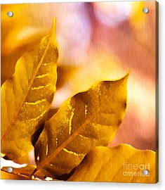 When Leaves Turn Gold Acrylic Print by Artist and Photographer Laura Wrede