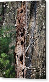 When Woodpeckers Attack Acrylic Print by Carrie Munoz