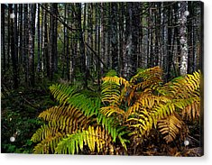 Where The Ferns Grow Acrylic Print