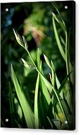 Where The Green Grass Grows.. Acrylic Print by Rachel Nuest